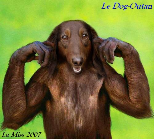 Divers animaux droles Hee7jvb4